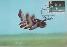 Saint Marin Carte Maximum 1996 Canards 1443 - Lettres & Documents