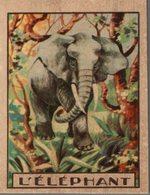 CHROMO  L'ELEPHANT - Chromos