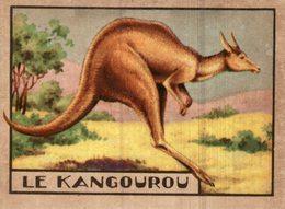 CHROMO  LE KANGOUROU - Trade Cards