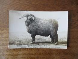FERMES DU CHÊNE PAR OULCHY LE CHATEAU AISNE BELIER MERINOS A M.LEVÊQUE PARIS 1929 CONCOURS GENERAL AGRICOLE - Photographie