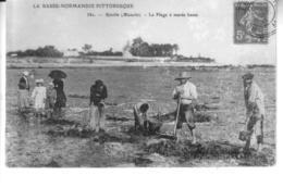 REVILLE La Plage à Marée Basse - France