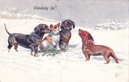 Dackel Teckel Dachshund  K.Feiertag Hunde Cani  Chien  Old Dog Cpa. 1911 - Chiens