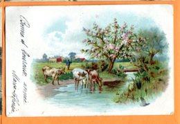SPR295, Vaches, Précurseur, Fantaisie, Circulée 1904 - Koeien