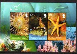 Falkland Islands 2013 Marine Surveys Sea Life MS, MNH, SG 1272 - Falkland Islands
