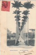 Rio De Janeiro - Jardin Botanico (1908, To Belgium) - Rio De Janeiro