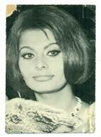 Sophia Loren Ca 1970 - Schauspieler