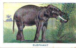 CHROMO BON POINT LE SIROP DE DESCHIENS  ELEPHANT - Chromos