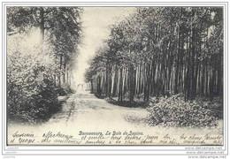 BONSECOURS ..-- Le Bois De Sapins . 1904 Vers BEAUMONT ( Melle BRICUSSE ) . Voir Verso . - Péruwelz