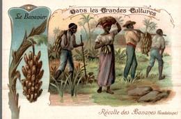 CHROMO BON POINT DRAGEES DE TABUROL MONAL  DANS LES GRANDES CULTURES  LE BANANIER - Kaufmanns- Und Zigarettenbilder