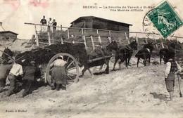CPA -  BREHAL  (50)  La Récolte Du Varech à Saint Martin De Bréhal - Une Montée Difficile. - Brehal