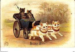 Une Vie   De Chat . - Cats