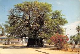 "0503 ""MADAGASCAR - BAOBAB"" CART. ORIG. SPED. 1989 - Madagascar"