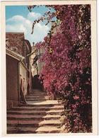 Bormes-les-Mimosas - Rue Rompi Couou  - (83 Var.) - Bormes-les-Mimosas