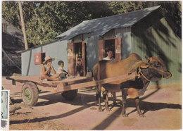 Gf. SEYCHELLES. Bullock Carts On La Digue - Seychellen