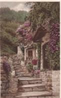 AQ28 Cottages, North Hill, Clovelly - Clovelly
