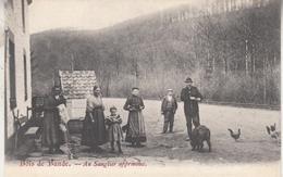 Bois De Bande - Au Sanglier Apprivoisé - Animé - Nassogne