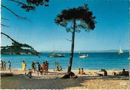 CPM/CPSM  - ÎLE DE PORQUEROLLES - Le Port - Porquerolles