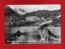 (2)  Colle Del Gran S.Bernardo (AO)- OSPIZIO CANI.  Viaggiata 1961.  Vedi Descrizione. - Italia