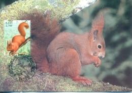 CM-Carte Maximum Card # 2001 - France # Animaux,animals #Rongeur,rodent,Nagetier # Écureuil,Squirrel,Eichhörnchen - Knaagdieren