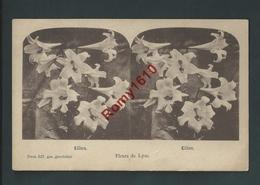 Carte Stéréoscopique. Lilien, Lys. Fleur De Lyse.  Dessin 527.  2 Scans. - Fleurs