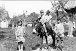 Photo Reproduction Des Années 1930 - Enfants Sur Un ânes - - Reproductions
