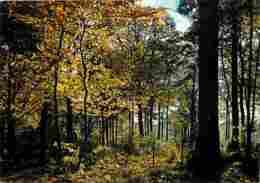 91 - Brunoy - La Forêt De Sénart - Voir Scans Recto-Verso - Brunoy