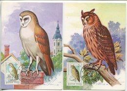 Owls -Hungary, 6 Maximum Cards, 1984 - Hiboux & Chouettes