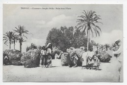 Tripoli - Chameaux Charches D'Alfa - Halte Dans L'Oasis - Salah Ben Gemha - Libye