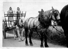 PHoto De Chevaux Et De Jeunes Femmes Grimpées Dans Un Tombereau Agricole A Identifier - Plaatsen