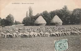 28 En Beauce Moutons Aux Champs Mouton Cpa Carte Animée Cachet 1906 - Non Classés