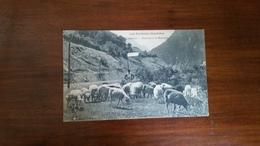 B7/ Moutons à La Montagne - Cauterets
