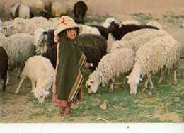 Nina Con Ovejas Vilacayma BOLIVIA Photo Peter Mc Farren, Enfant, Moutons - Bolivia