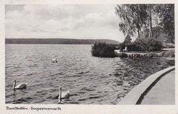 AK Neustettin - Seepromenade - 1941 (40943) - Pommern