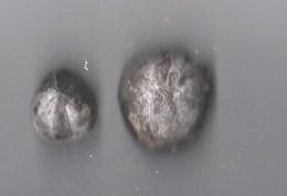 Lot De 2 Oursins Fossiles (4/3cm-3/2cm) état Brut - Fossiles