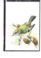 Buzin - Roitelet Huppé - 1985-.. Oiseaux (Buzin)