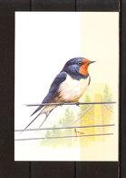 Buzin - Hirondelle De Cheminée - 1985-.. Oiseaux (Buzin)