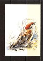 Buzin - Moineau Friquet - 1985-.. Oiseaux (Buzin)