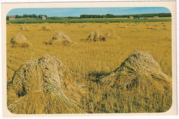 Hay Stacks - 'With Distant Cries Of Reapers In The Sun ...Matthew Arnold'-  Canada - Zonder Classificatie