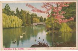 Victoria - Beacon Hill Park - (B.C., Canada) - Victoria
