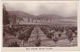 Okanagan Valley - Fruit Orchard, British Columbia -  (Canada) - Kelowna