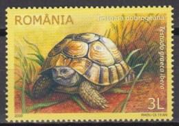 Romania 2009 (MNH) - Mi 6383:  Greek Tortoise (Testudo Graeca Ssp. Ibera) - Tortues