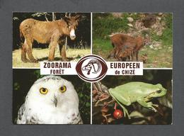 ANIMAUX - ANIMALS - ZOORAMA - ZOO - FORÊT DE CHIZÉ - PHOTOS ZOORAMA - Autres