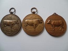 Lot De 3 Médailles Maison Willems En Zonen Rosendaal 29 Septembre 1951 - France