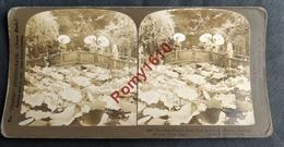 Photo Stéréoscopique. Japon. L'étang Des Lotus, Jardins De Jhiba. Dédié à Benten, Déesse De La Fortune. Tokio.  2 Scans - Photos Stéréoscopiques