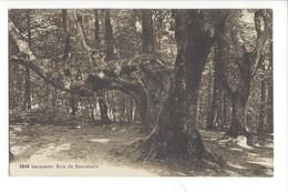 21975 - Lausanne Bois De Sauvabelin + Cachet Signal De Lausanne - VD Vaud
