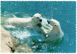 Ref 1287 - 1969 Sweden Postcard - Polar Bears - Lekande Isbjornar Kolmardens Djurpark Zoo - Bears