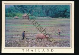 Thailand - Farmer And Water Buffelo [AA43-1.086 - Tailandia