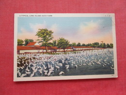 Typical Long Island Duck Farm -- Long Island  NY    Ref 3328 - Long Island