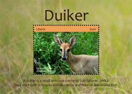 Liberia  2018 Fauna Duiker  I201901 - Liberia