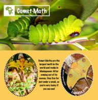 Liberia  2018 Fauna Comet Moth I201901 - Liberia